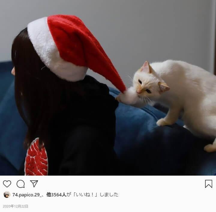 東海オンエアゆめまるの嫁 タンパク質武田